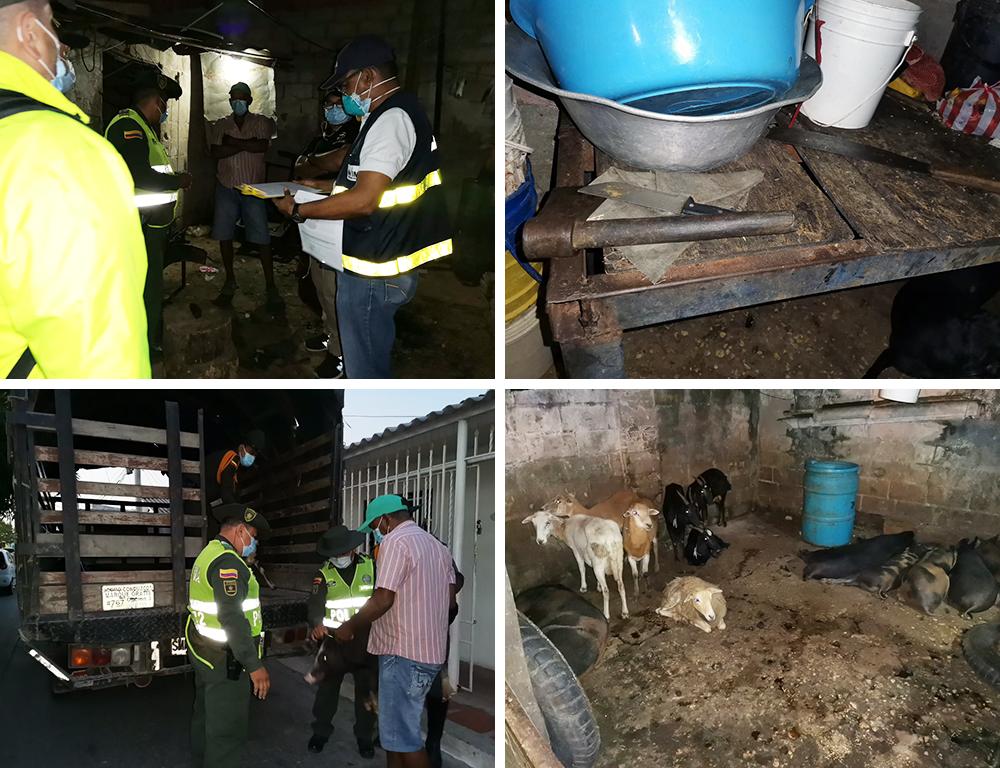 Invima y Policía Nacional impiden sacrificio animal ilegal en Barranquilla
