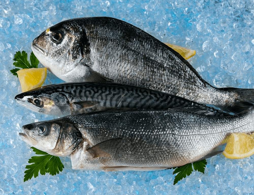 Productos de la pesca y acuicultura ya se pueden exportar a Israel